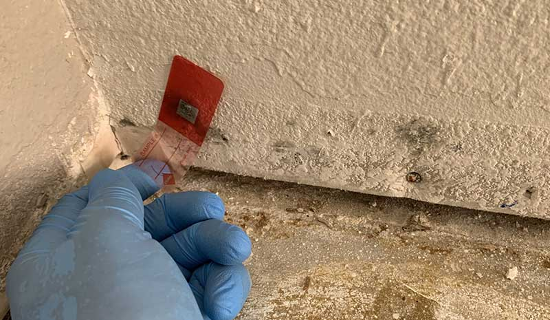 toronto mold inspection