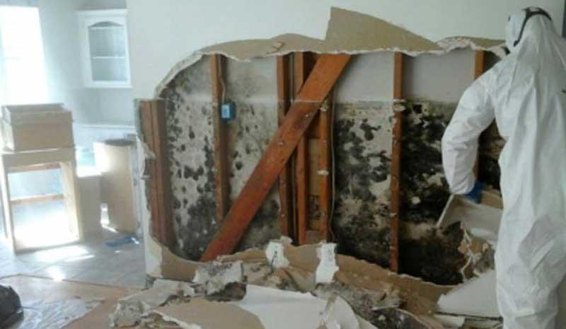 toronto mold remediation company