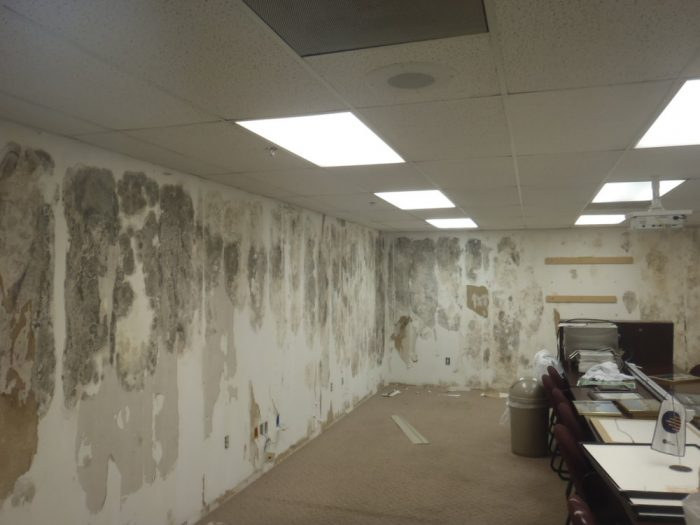 commercial mold removal toronto