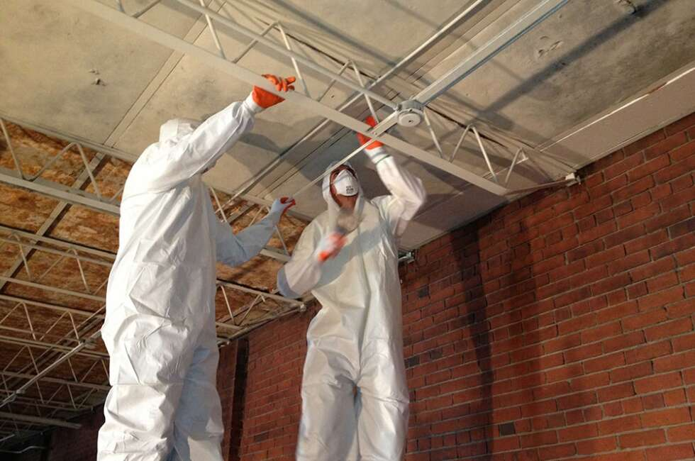 commercial mold removal company
