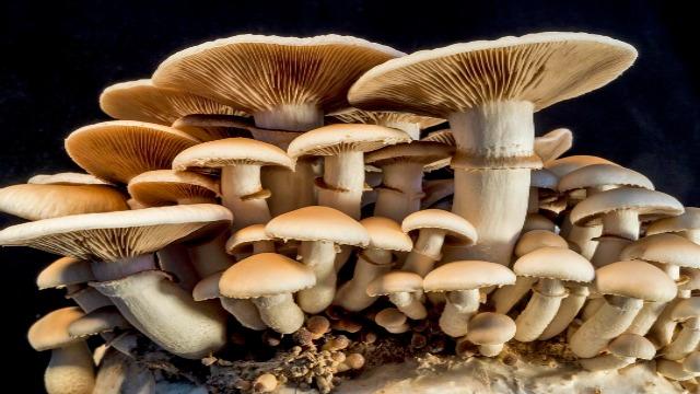 Favorite Mushrooms for Immune Support