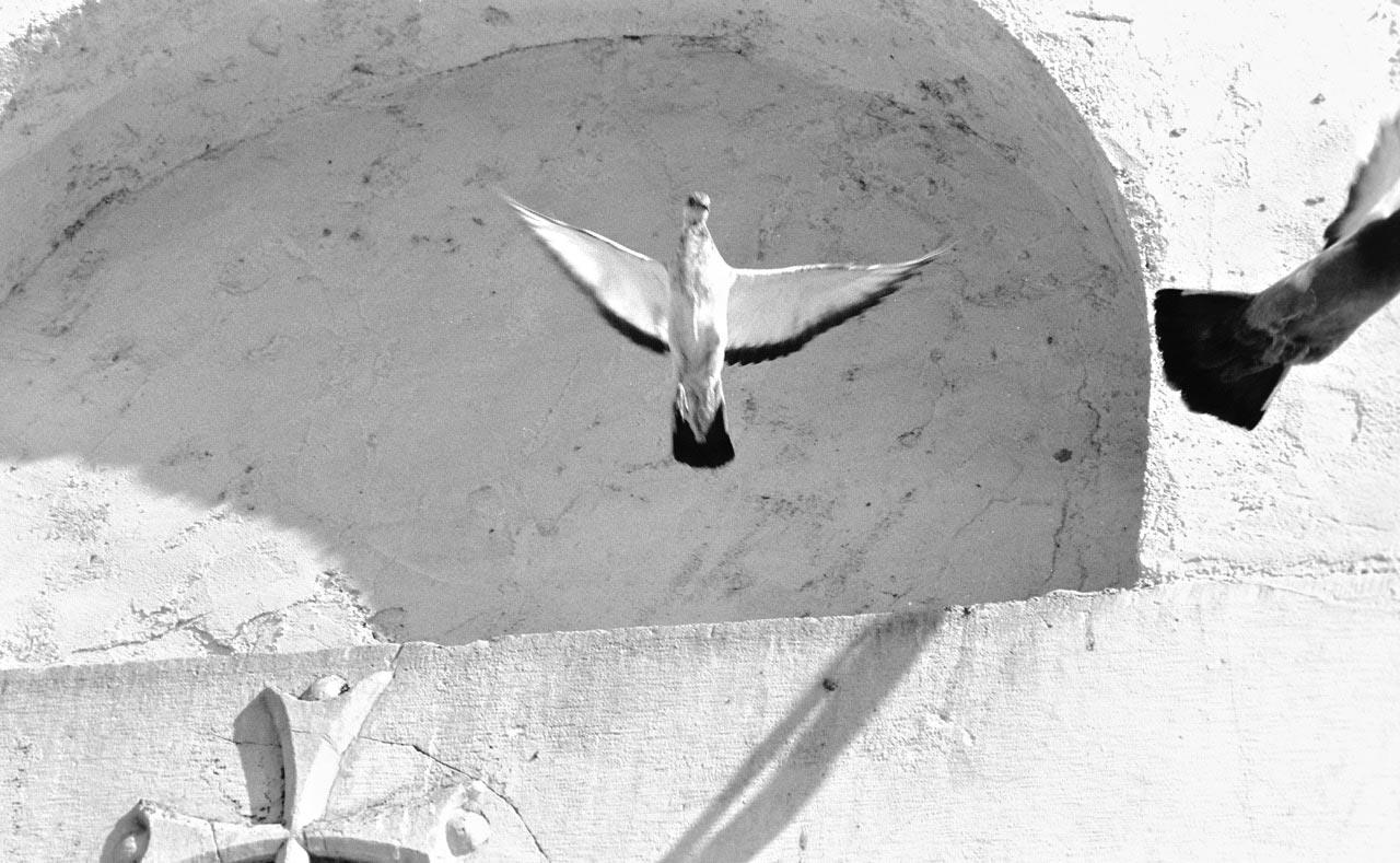 white-doves-flying-away
