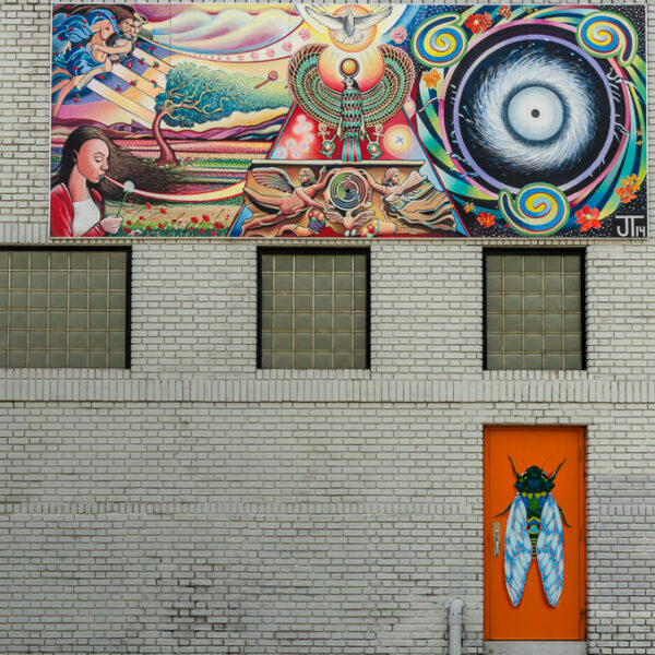 [Cicada] 2300 E. Douglas - by Delilah Reed and Maggie Gilmore - photo from 2016