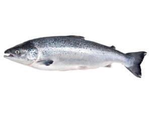 faroe-salmon