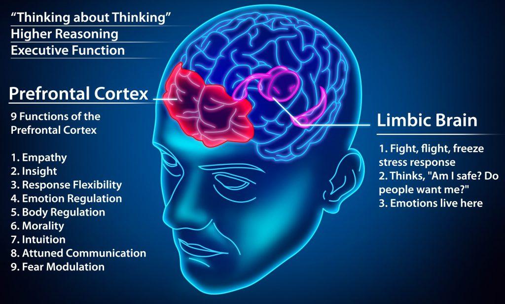300 dpi prefrontal cortex vs limbic CHART.CROPPED