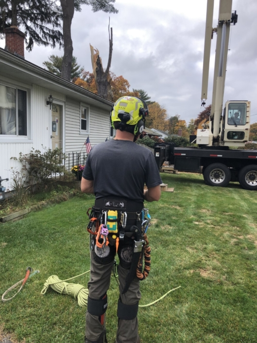about western mass tree care