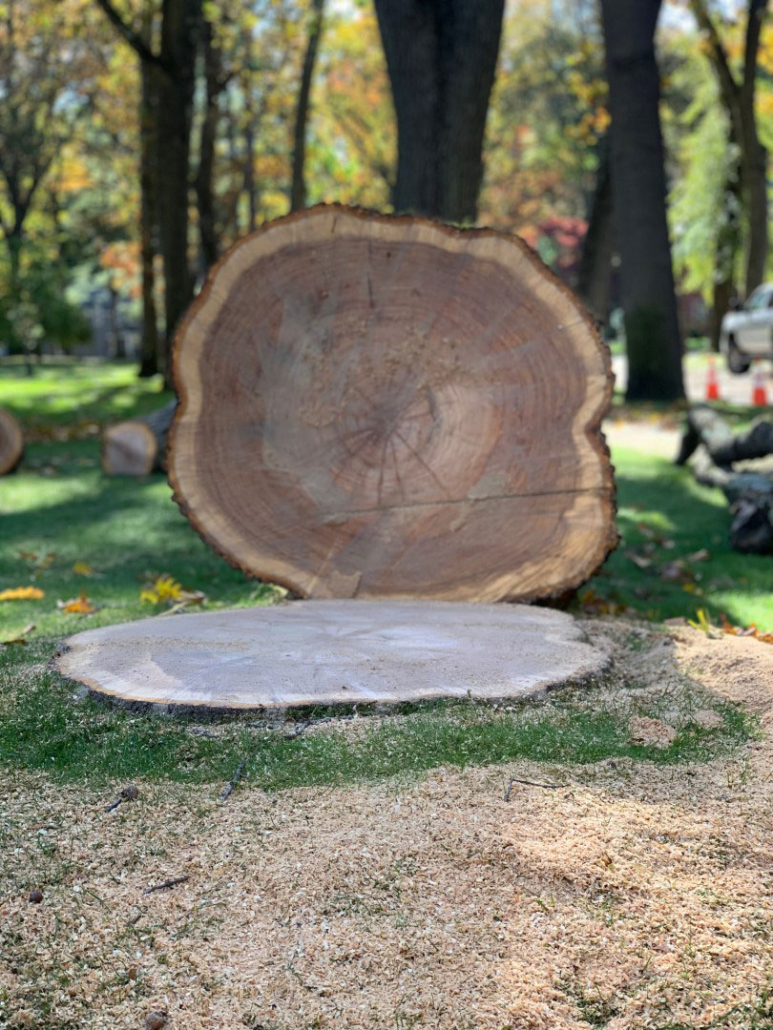 stump-grinding-removal-(2)