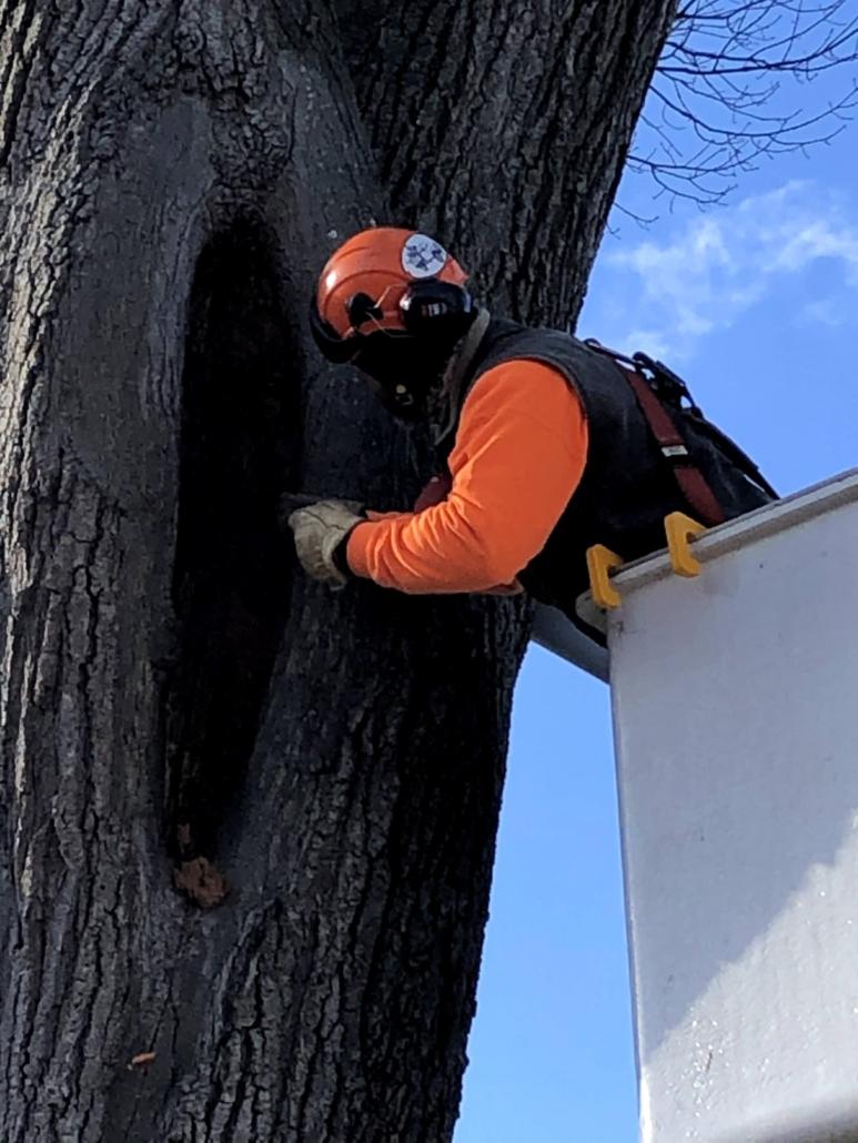 tree consultation and diagnostics