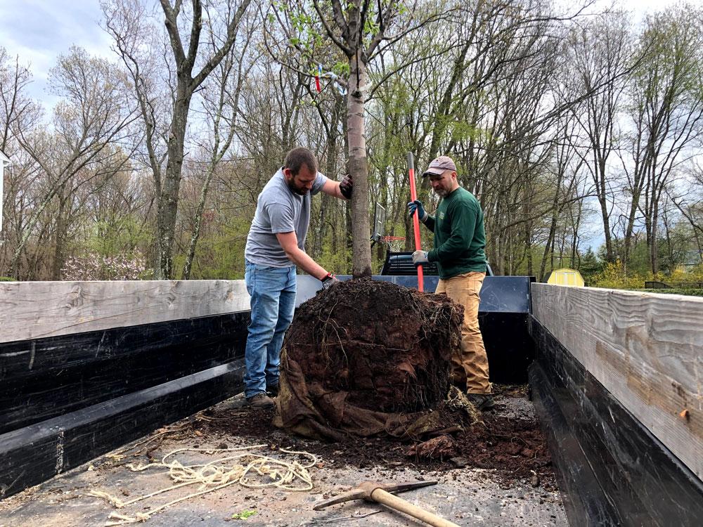 tree planting and tree care western mass tree care