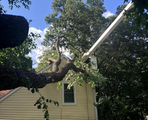 western mass tree care tree emergency service