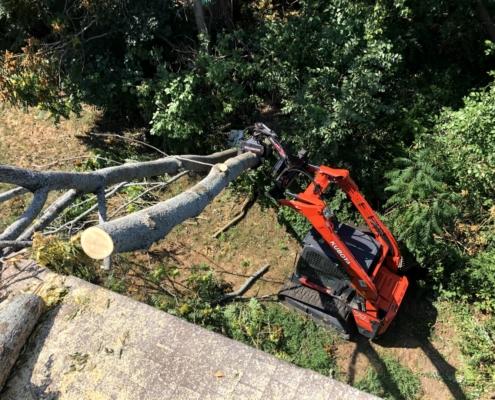 tree emergency services in western MA