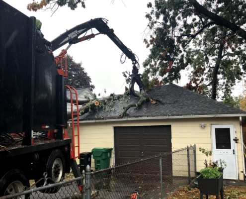 tree emergency services western mass tree care