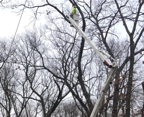 tree trimming with a bucket