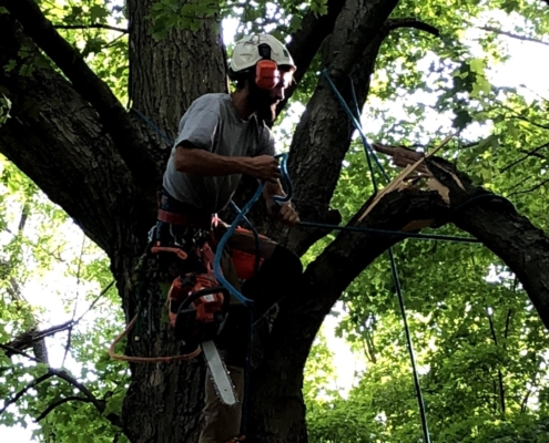 tree pruning and tree trimming