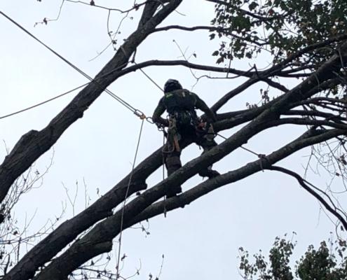 tree trimming western mass tree care