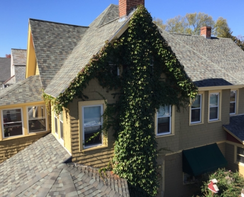 tree pruning and tree trimming western mass tree care