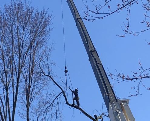 tree pruning MA western mass tree care