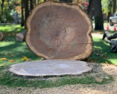 stump grinding and stump removal (1)