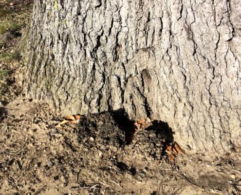 tree diagnostics