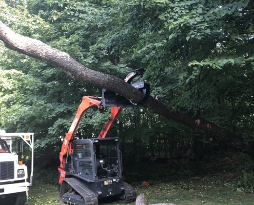 tree removal western mass tree care