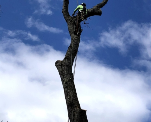 tree removal service western mass tree care