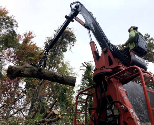 tree removal service in western MA