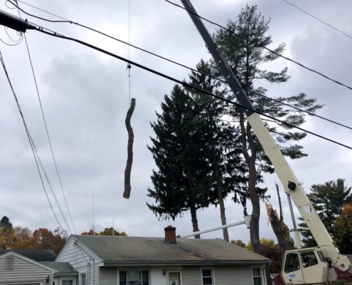 removing dead trunk of a tree western mass tree care