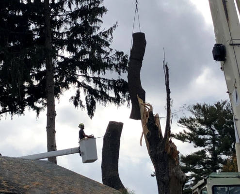 removing trees western mass tree care