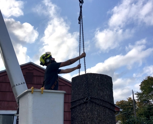 western mass tree care tree removal