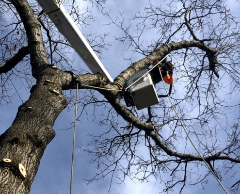 western mass tree care tree removal service