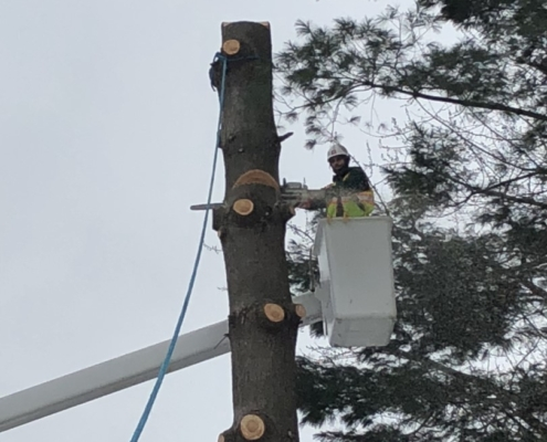 tree removal service professional