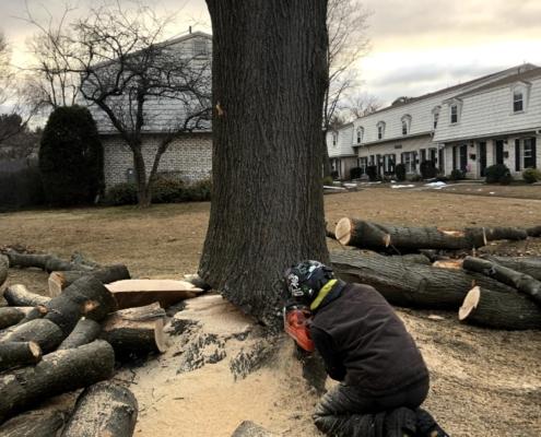 tree removing western mass tree care