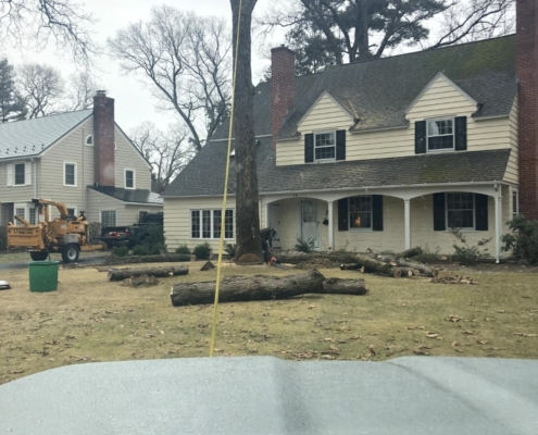 remove trees from property western mass tree care
