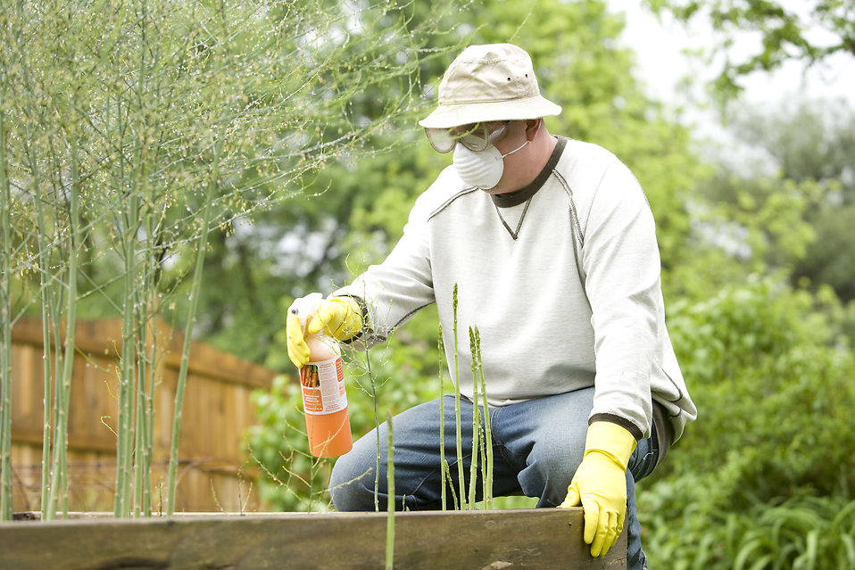 avoid pesticides and herbicides by growing your own food