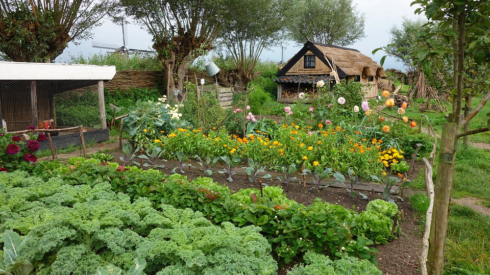 be in tune with nature by growing your own food