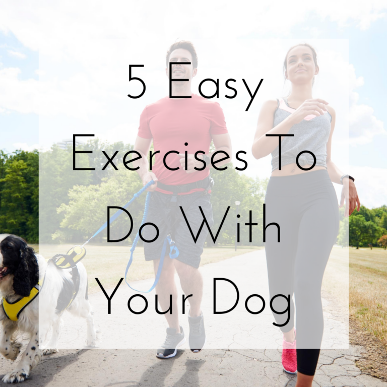 5 Easy Exercises To Do With Your Dog