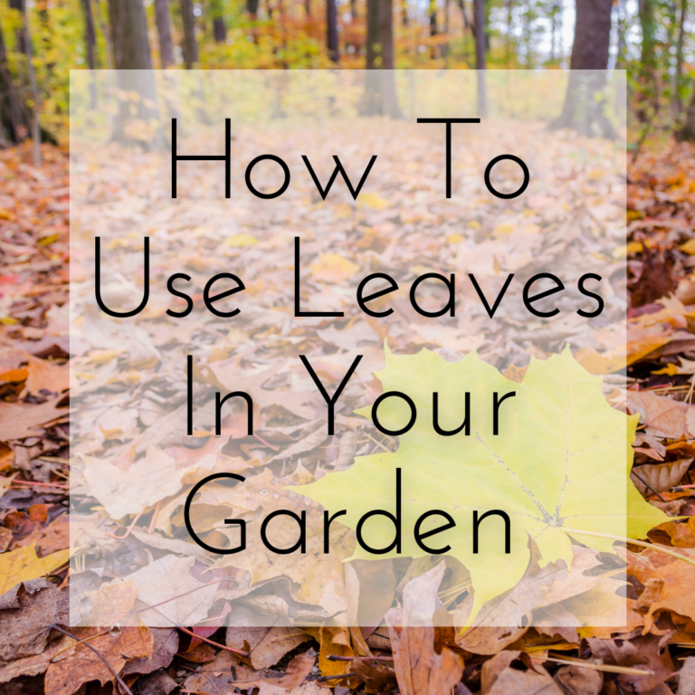 How To Use Leaves In Your Garden