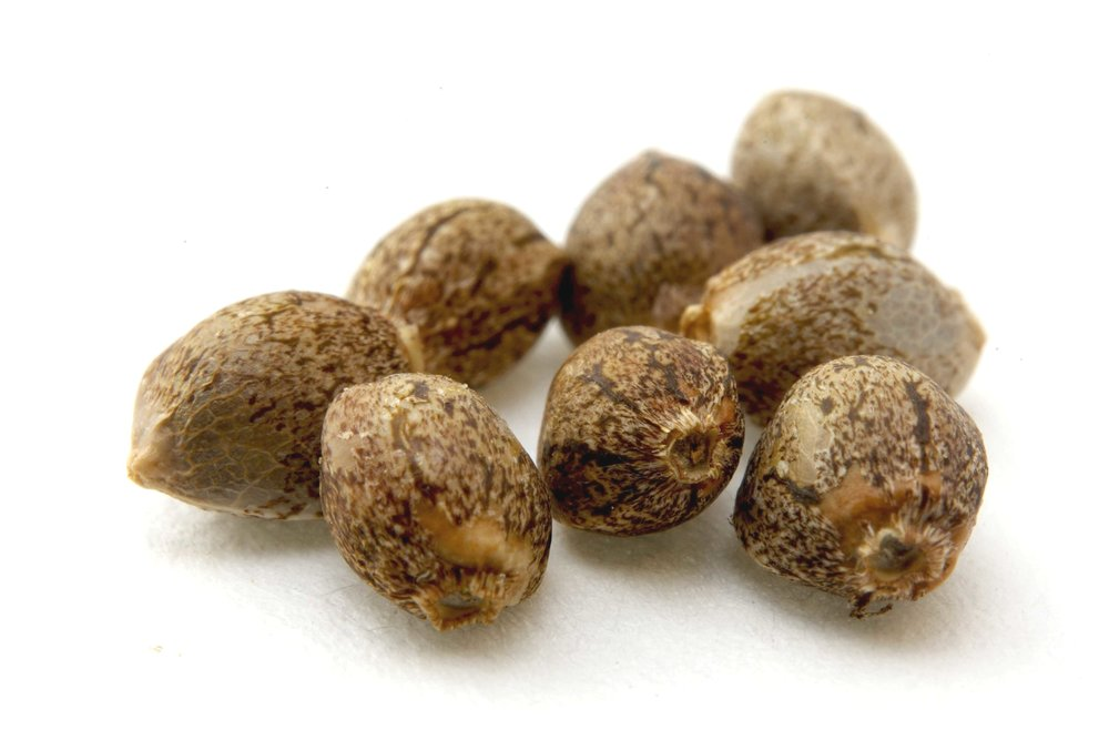 Close up of Cannabis Seeds on a white background.