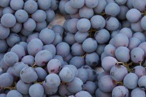 Grapes - resveratrol