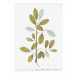 Remastered 18th C. Swedish Botanicals $650 | Paloma & Co.