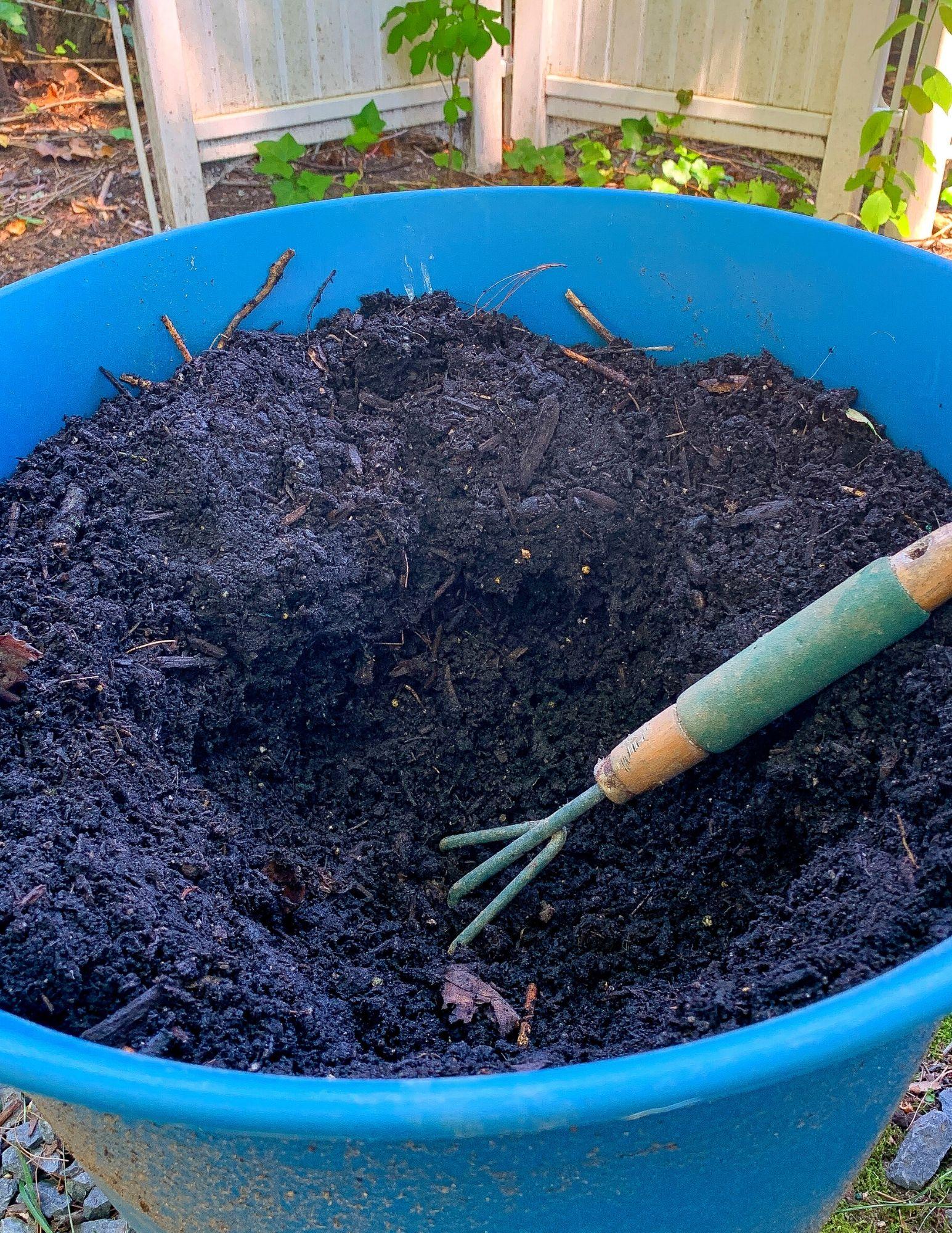 How to Plant Hydrangeas in Pots-4