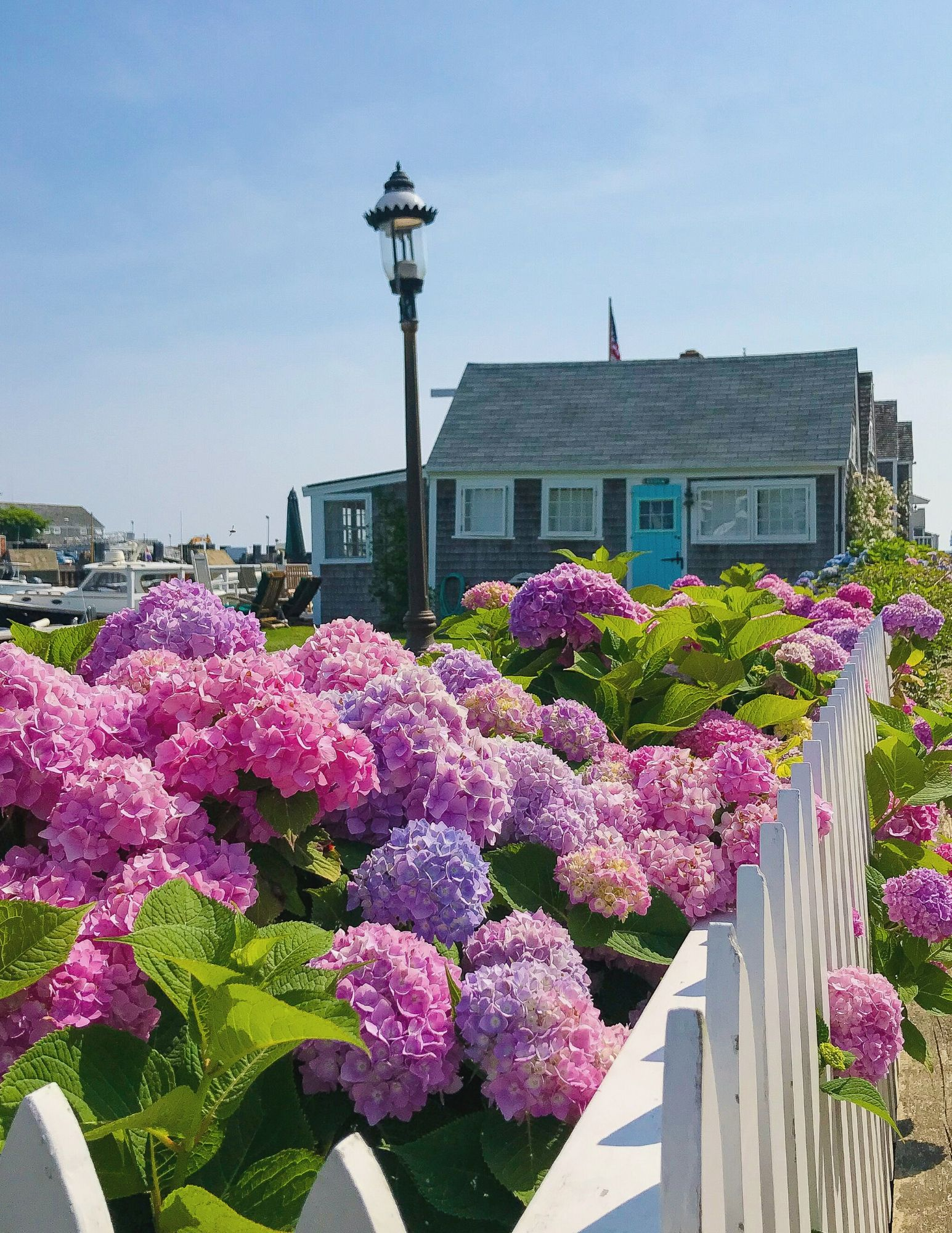 Nantucket Hydrangeas-2