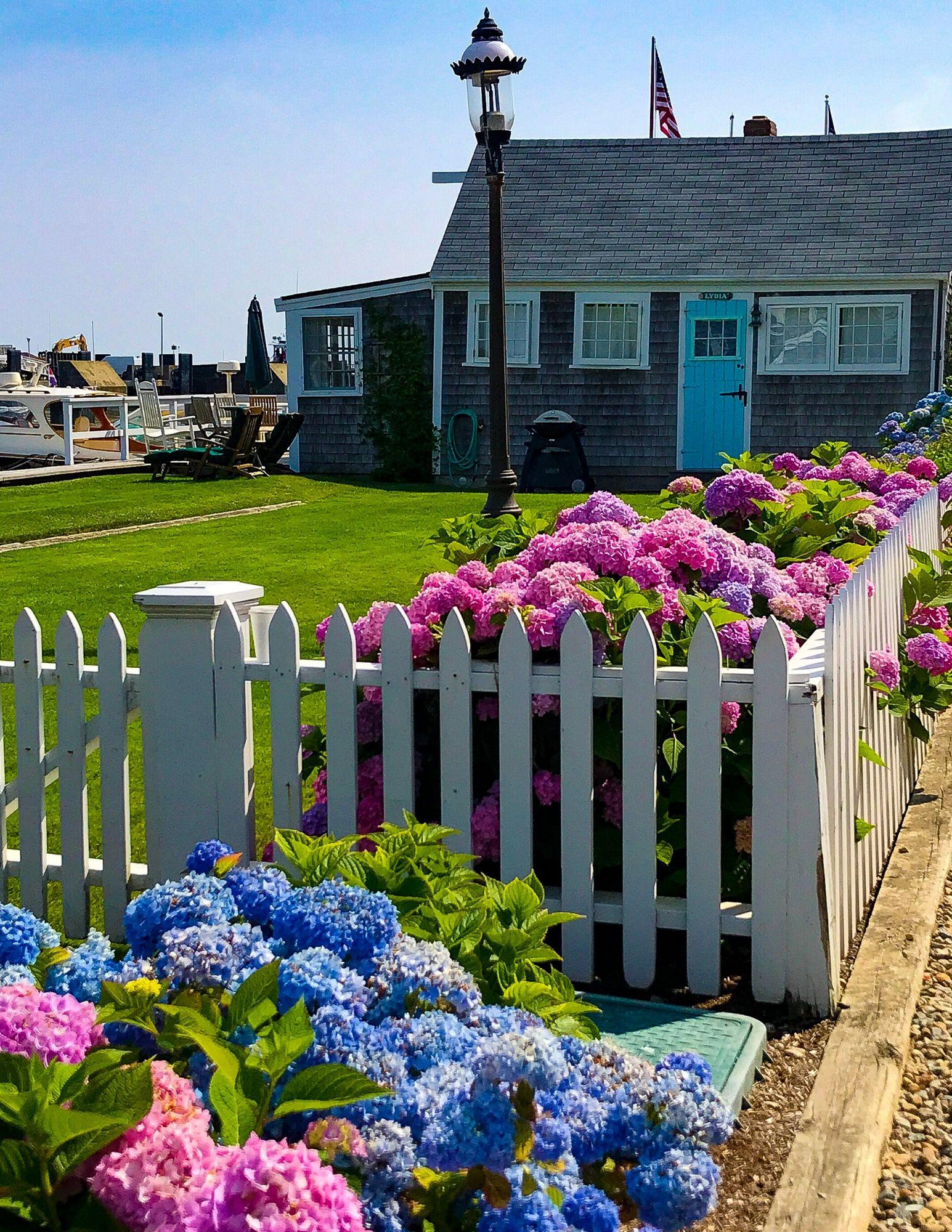 Nantucket Hydrangeas-29