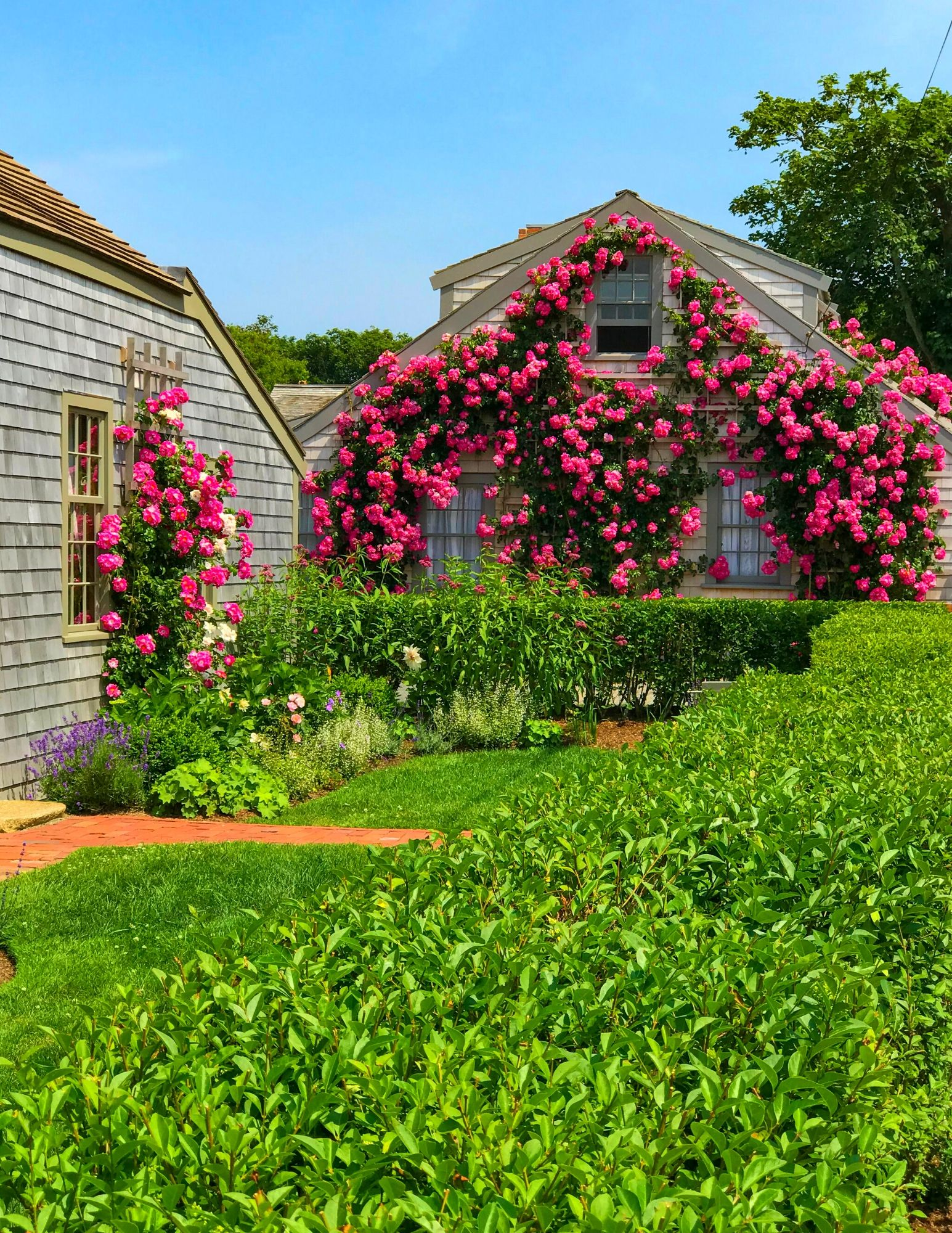 Nantucket Rose Covered Cottages in Sconset-19