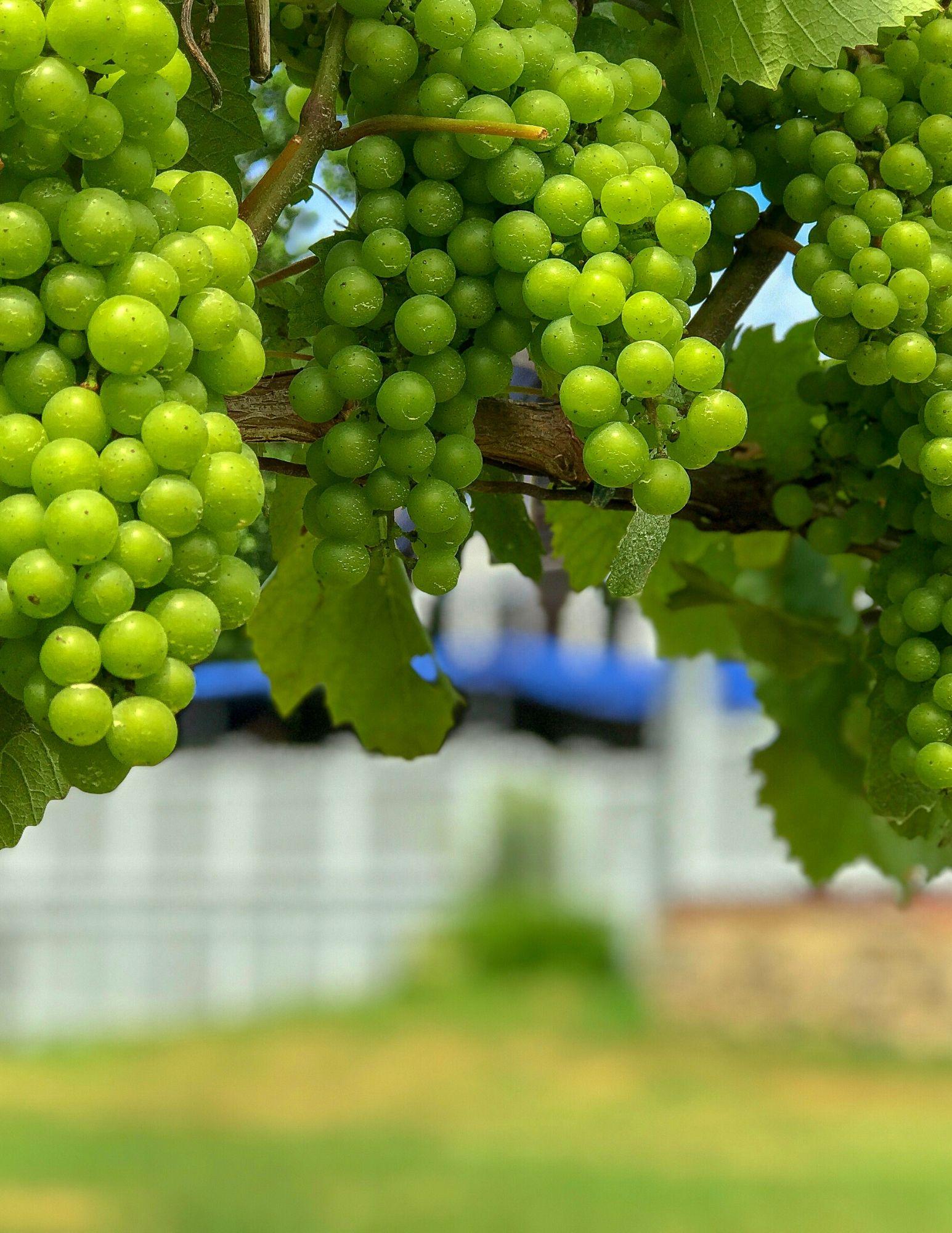 Stonington Vineyards CT Wine Trail-3