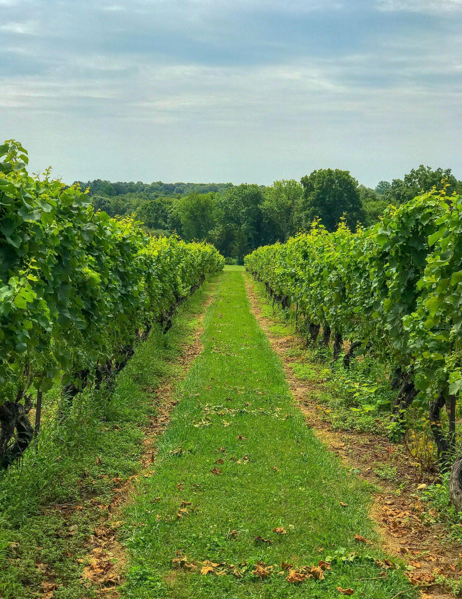 Stonington Vineyards CT Wine Trail-5