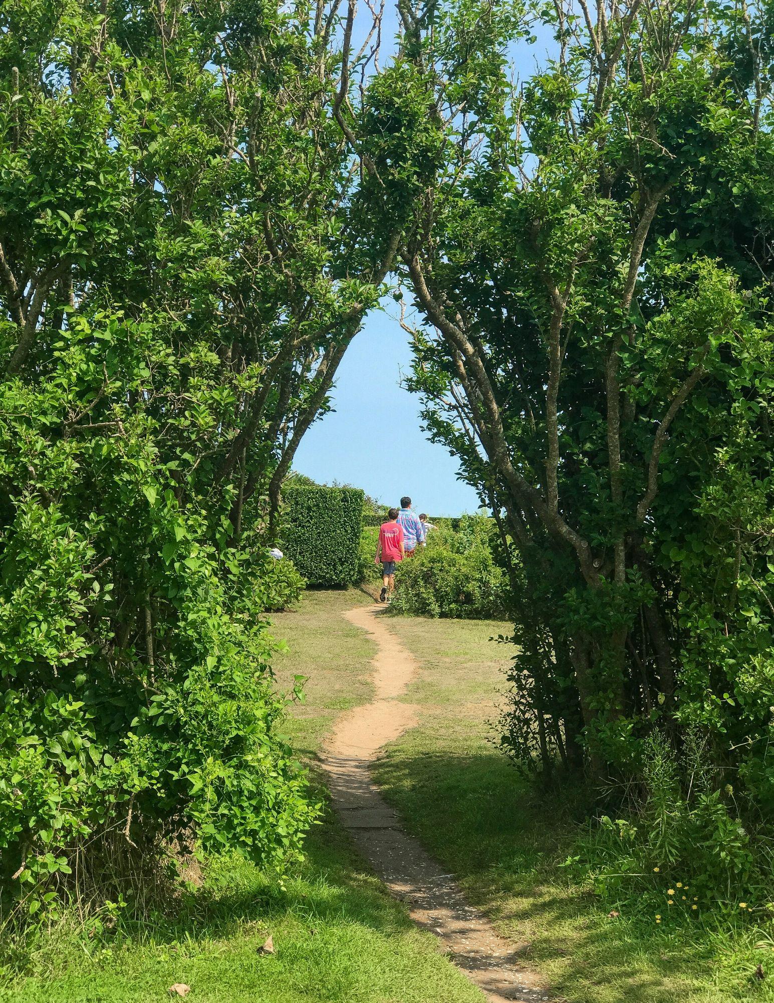 The Sconset Bluff Walk Siasconset Nantucket-27