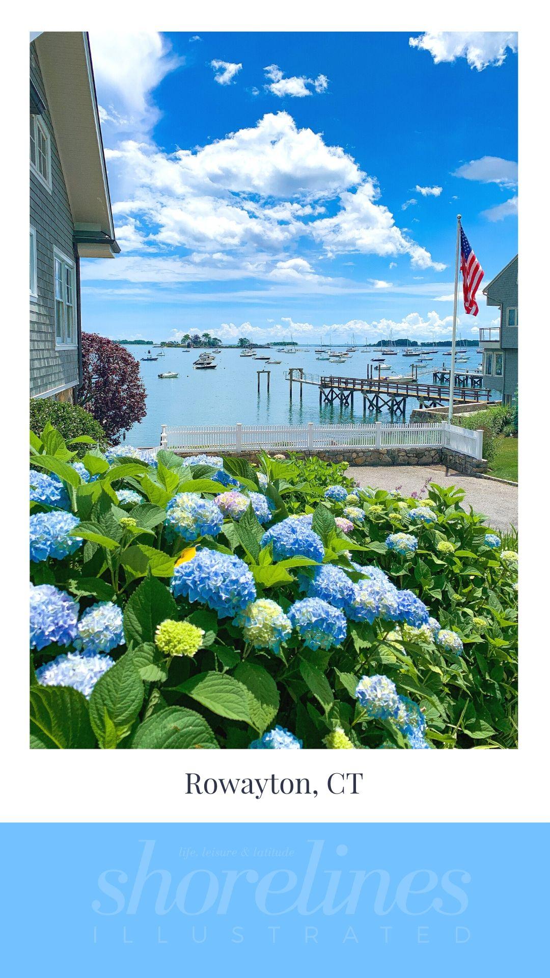 Blue Hydrangeas of New England-14