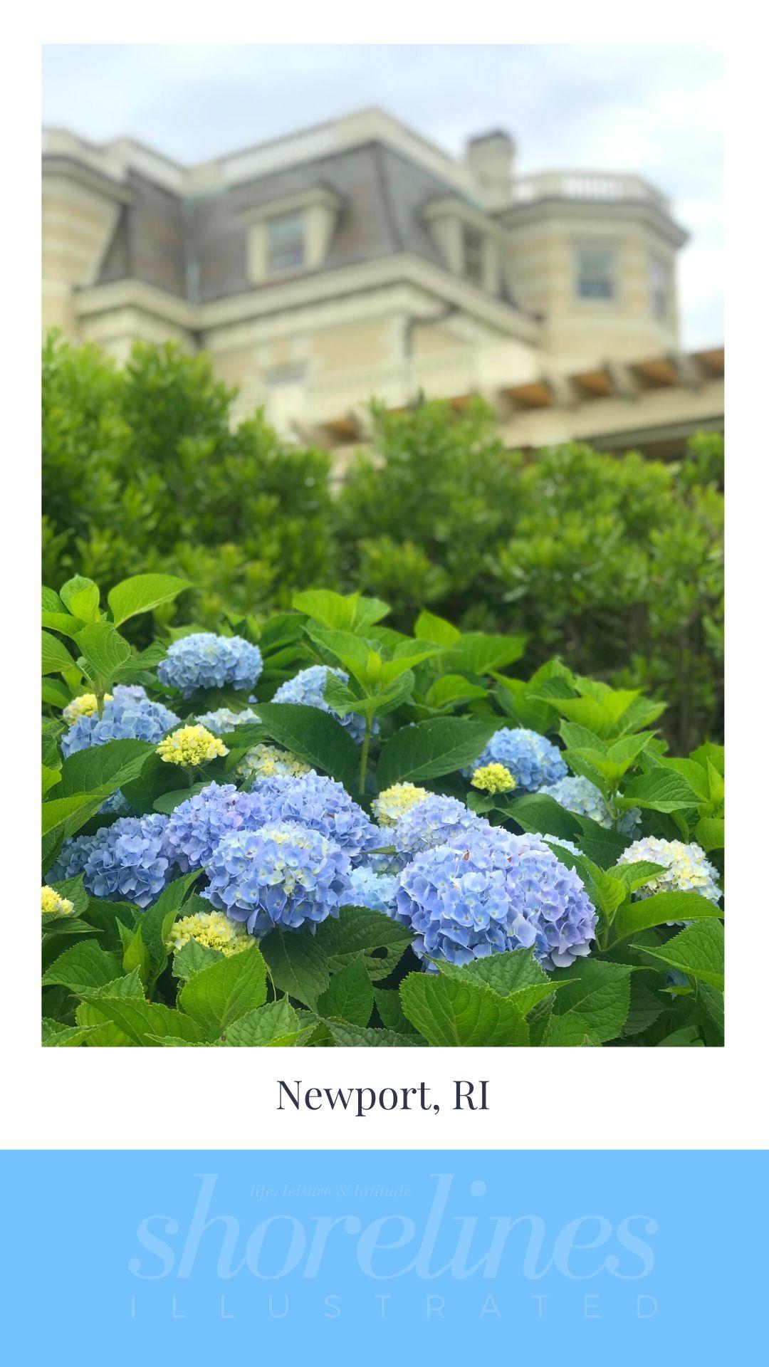 Blue Hydrangeas of New England-17
