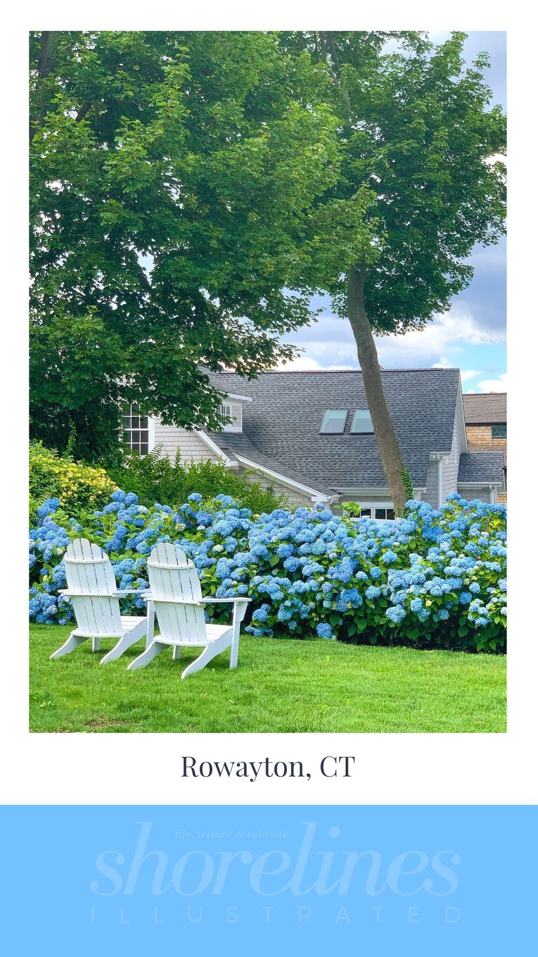 Blue Hydrangeas of New England-3